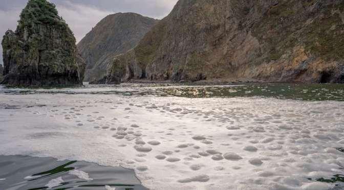 Muerte de animales marinos en península rusa plantea temor de «desastre ecológico»