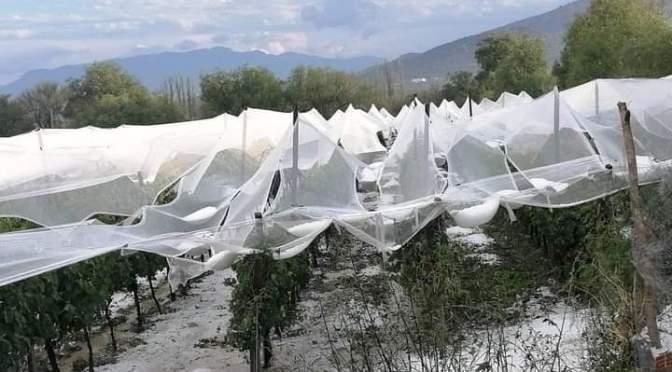 Datos oficiales: 414 familias damnificadas por la granizada