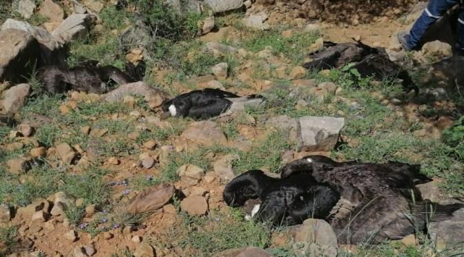 Autoridades formalizan denuncia y se inicia investigación por el biocidio de 35 condores en Tarija