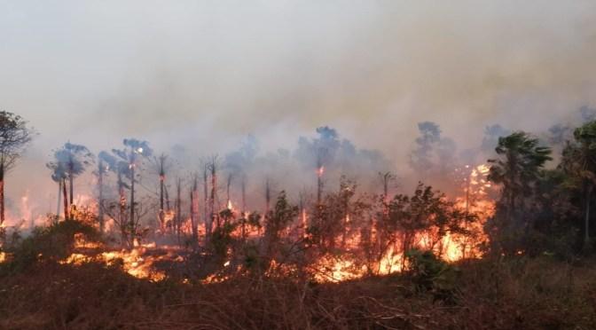 Las FFAA activarán un plan de prevención de incendios forestales que incluye patrullajes aéreos y pluviales