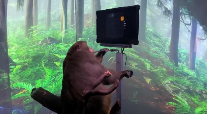 Video: Mono Juega Videojuegos gracias a un chip implantado