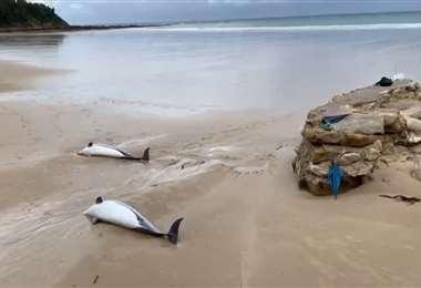 Ghana: 60 delfines muertos aparecen en las playas