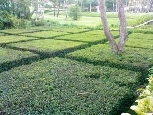 Sheraton landscaped garden