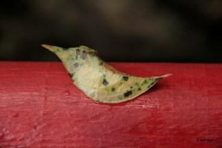 Magnolia 035_1