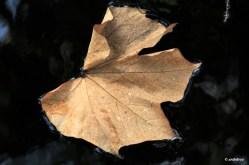 Magnolia 365_2_2
