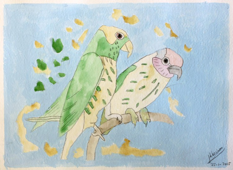 Papegaaien 1