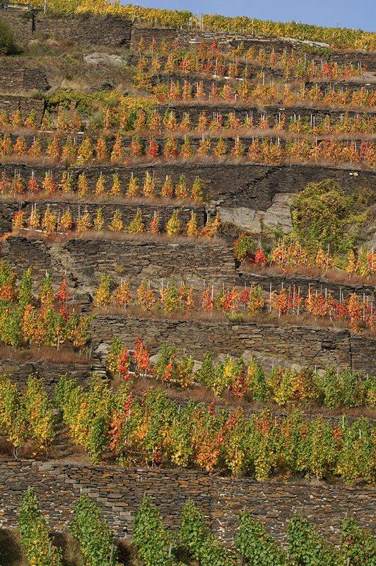 Wer auf dem Bahnsteig noch warten muss, kann im Herbst diesen Blick auf das buntgefärbte Weinlaub genießen (Foto: Hans-Joachim Schneider)