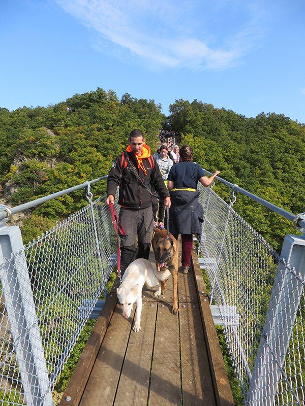 Da geht doch tatsächlich ein Mann mit zwei großen Hunden über die Geierlay Hängebrücke. Das wäre mir persönlich zu stressig: Gleich mit zwei Hunden an der Leine über die Brücke (Foto: Hans-Joachim Schneider)