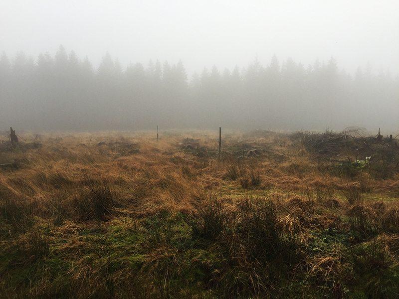 Hier steht ein Bild mit dem Titel: Nebel, Nebel, wen hast Du gestohlen ... Da fällt mir nur dieses alte Gedicht ein (Foto: Hans-Joachim Schneider)