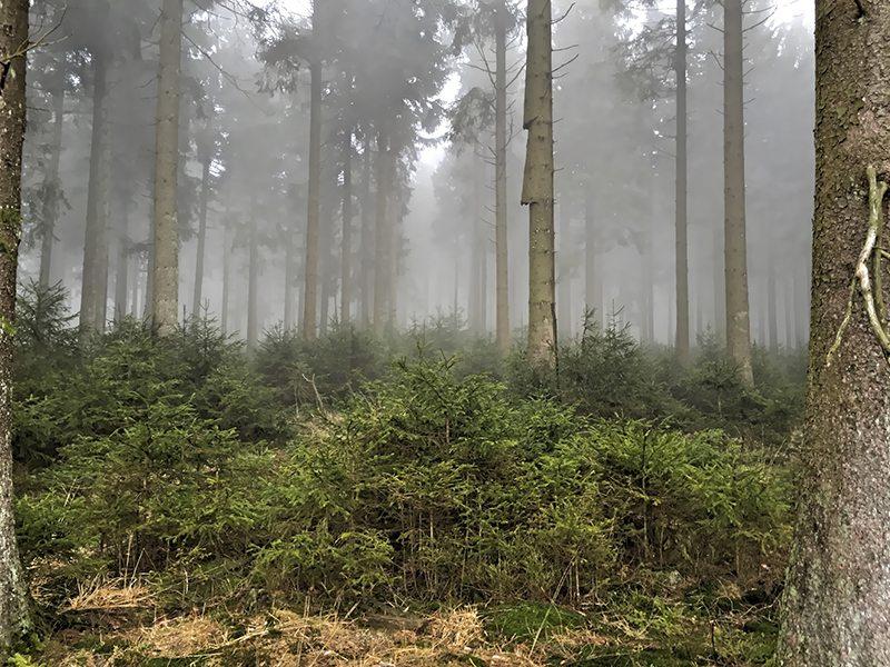 Hier steht ein Bild mit dem Titel: Nebel umfängt auch den Nadelwald (Foto: Hans-Joachim Schneider)