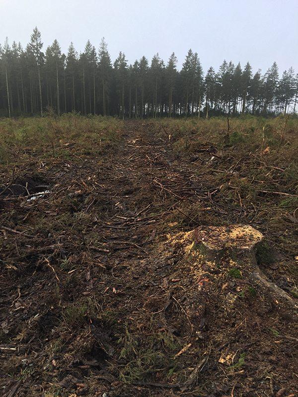 Hier steht ein Bild mit dem Titel: Wo bleibt da der Naturschutz? Was schadet mehr: der Harvester oder Wanderers Fußabdruck (Foto: Hans-Joachim Schneider)