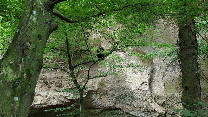 Fast senkrecht hat sich der Tönissteiner Bach in den weichen Trassboden eingegraben und so die Wolfsschlucht entstehen lassen (Foto: Hans-Joachim Schneider)