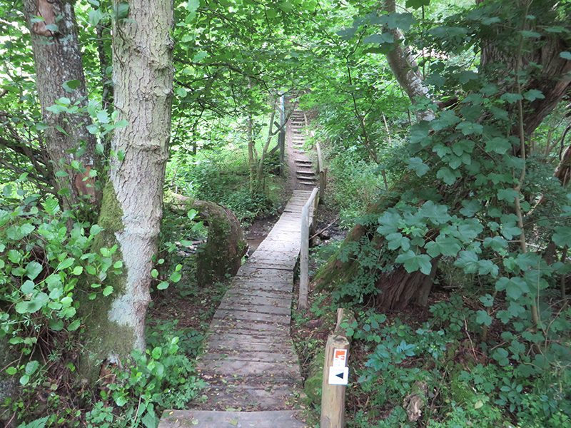 Holzstege und eine Treppe erleichtern den Übergang über das Feuchtgebiet nahe am Erlenbrunnen (Foto: Hans-Joachim Schneider)