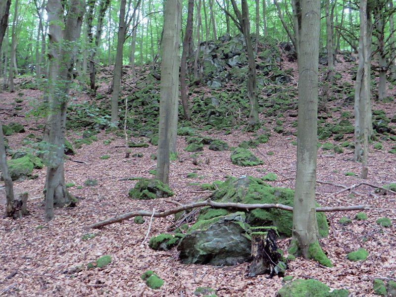Schmale Buchenstämme, dazwischen bemooste Felsklippen zeugen schon zu Beginn des Weges von der Natur des Traumpfades Vier-Berge-Tour