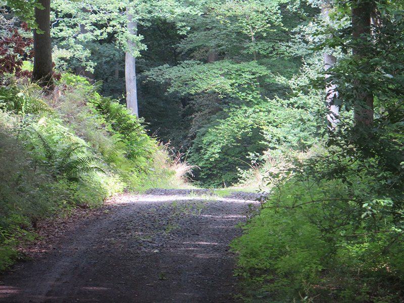 Hier steht ein Foto mit dem Titel: Auf breitem, gut befestigten Weg geht es kilometerweit bergab (Foto: Hans-Joachim Schneider)