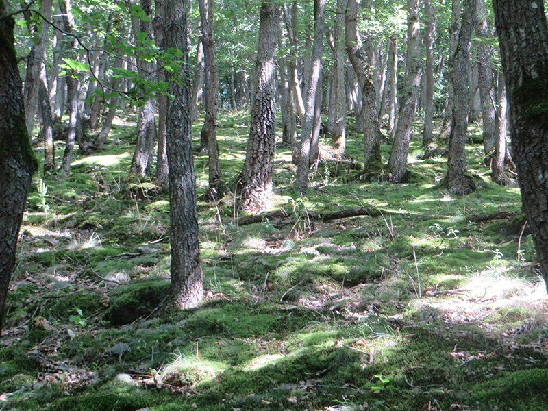 Und immer wieder verzauber der lichte Eichenwald (Foto: Hans-Joachim Schneider)