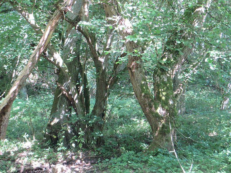Bis auf ein kurzes Stück im Tal verläuft die Traumschleife Murscher Eselsche fast ausschließlich im Wald (Foto: Hans-Joachim Schneider)