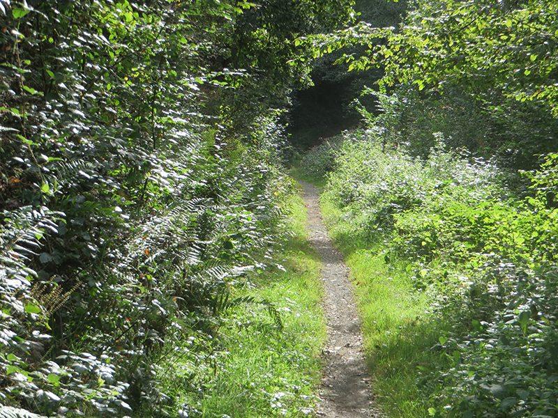 Hier steht ein Bild mit dem Titel: Gerade mal kein Mensch unterwegs auf dem Westerwaldsteig (Foto: Hans-Joachim Schneider)