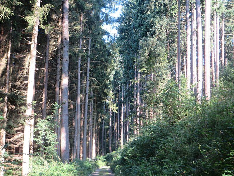 Mit aller Macht streben die Bäume hier im Tal zum Licht (Foto: Hans-Joachim Schneider)
