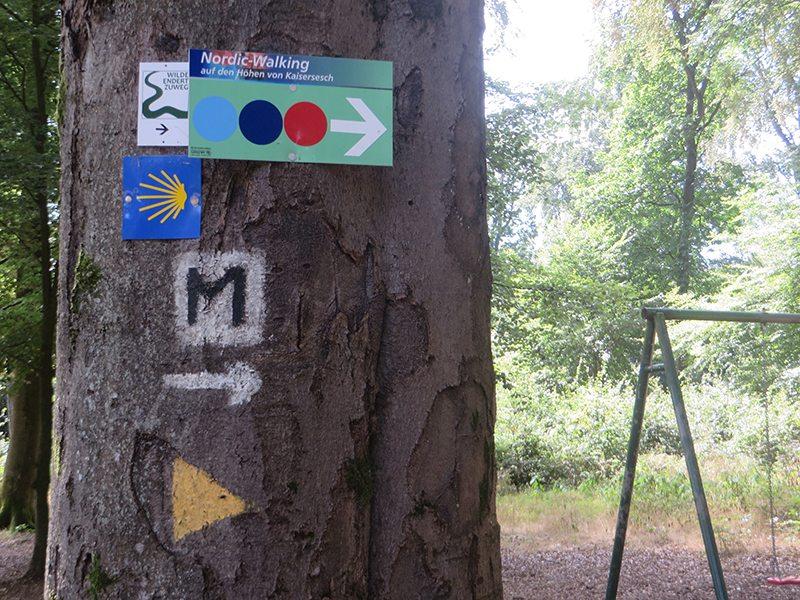 Typischer Naherholungswald ... und viele, viele Wegzeichen an den Bäumen