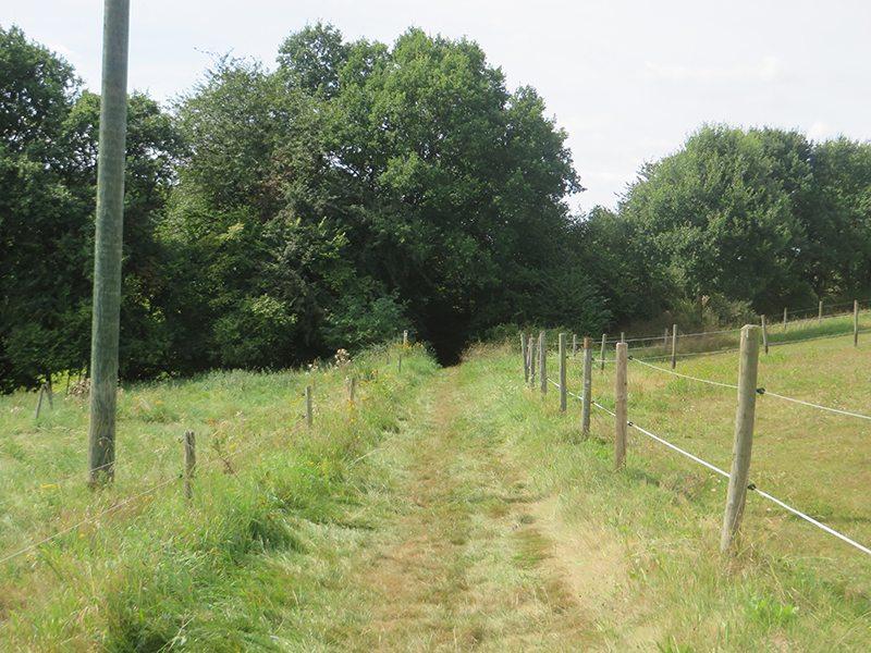Rechts und links grüne Wiese, in der Mitte ein Weg. Bei Breitenbruch führt der Zuweg in den Wald (Foto: Hans-Joachim Schneider)
