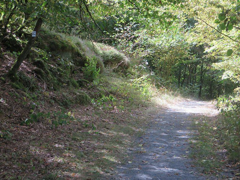 Ein breiter Pfad mitten durch den Wald: Der Grund unter meinen Füßen ist mehr und mehr durchsetzt mit brüchigem Schiefer