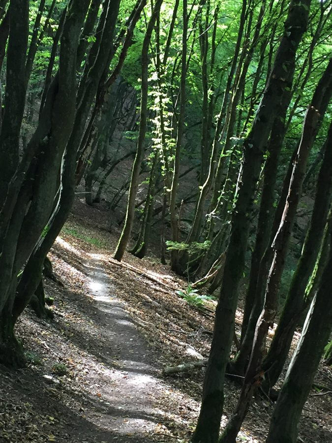 Ein schmaler Pfad zwischen jungen, grünen Bäumen: Der verzauberte Wald bei der kleinen Kapelle