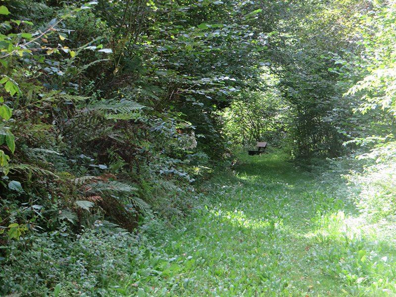 Ganz in Grün sind Wanderweg und Gebüsch: Grünes Paradies auf dem Weg zur Wilden Endert