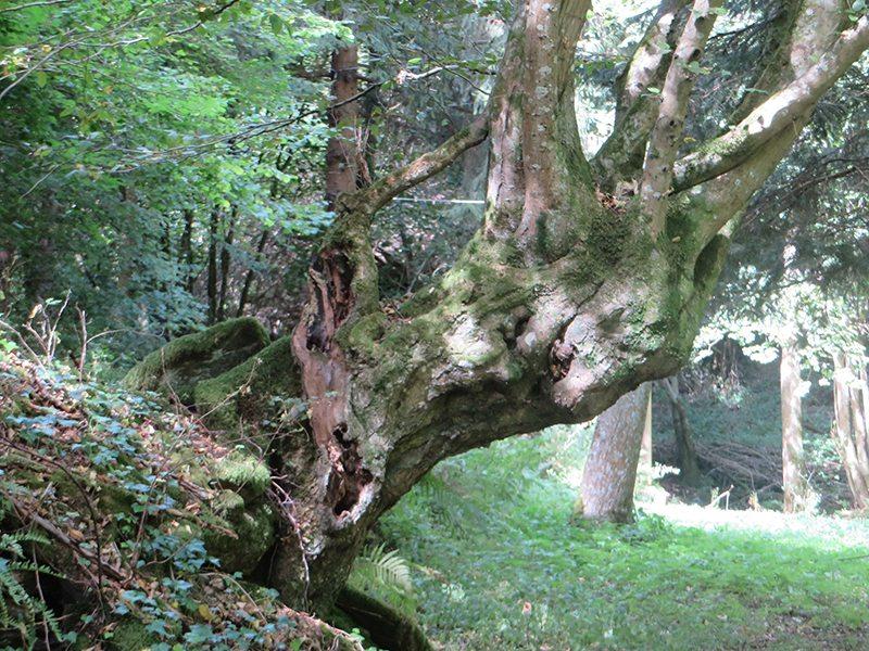 Die Wilde Endert wird begleitet von ebenso wilden Baum-Gesellen