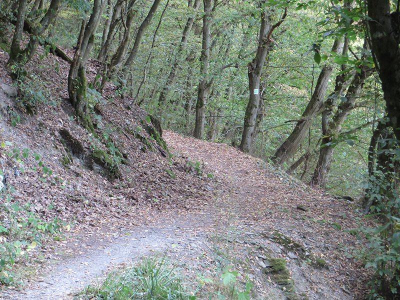 Statt neben der Landstraße herzulaufen, biege ich lieber noch einmal in den Wald ab