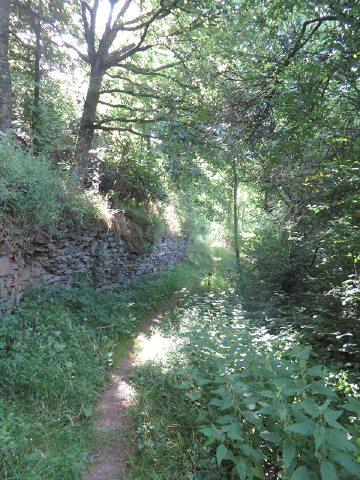 Hier steht ein Bild mit dem Titel: Gleich zu Beginn der Ahrsteig-Etappe 5 geht es auf steilem Pfad in den Lingenberg (Foto: Hans-Joachim Schneider)