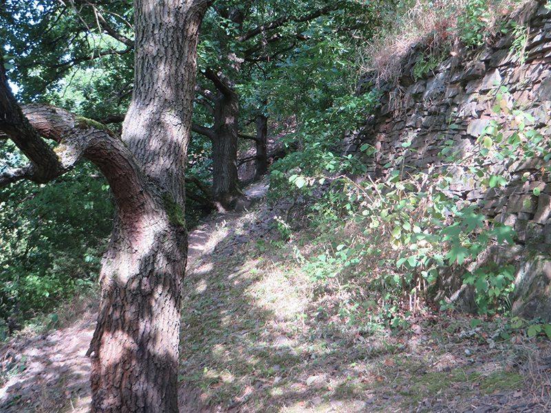 Weg, Pfad, Wald, Eichenbäume, Sonne, Schatten,