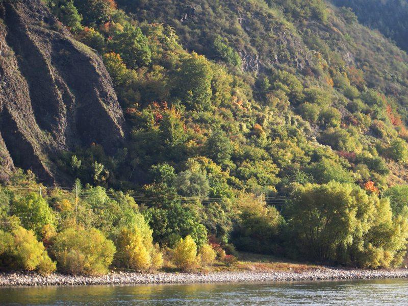 Felsen und Buschwerk am Rheinufer gegenüber der goldenen Meile an einem Oktobermorgen: Das frühe Herbstlicht wärmt die Farben