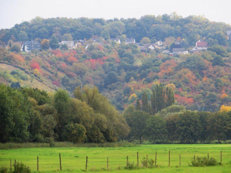 Der Rhein versteckt sich, jenseits strahlen wieder die Herbstfarben. Das Tuckern der Schiffsmotoren aber ist nicht zu überhören (Foto: Hans-Joachim Schneider)