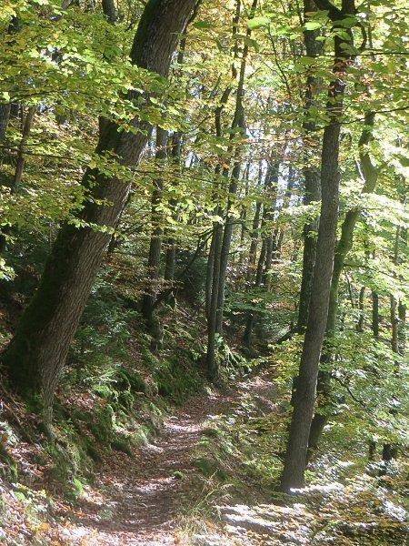 AhrSteig, Wald, Pfad, Steig, Ahrtal erleben, klettern