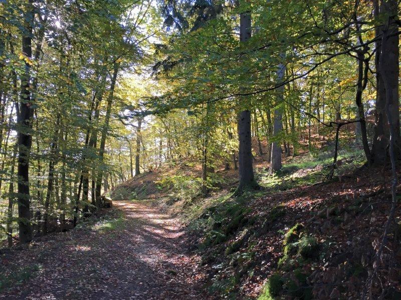 Wald, grünes Laub, verspieltes Licht auf dem Ahrsteig blau.