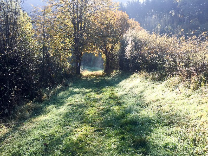 Wiese, Wiesenweg, Dunst, Reif, Herbst am Ahrsteig blau kurz vor Schuld
