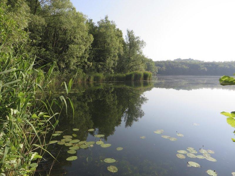 Wasser, See, Grün, Wald, Seerosen, Frühaufstehertour, Sonnenaufgang