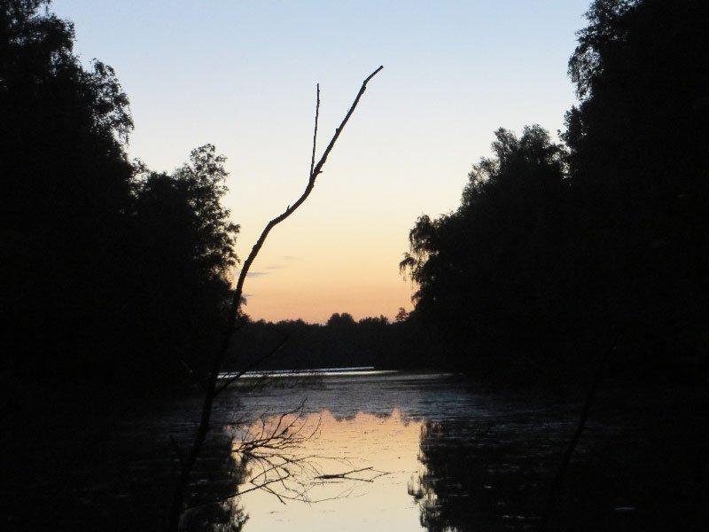 Wasser, Wald, Sonnenaufgang bei der Frühaufstehertour