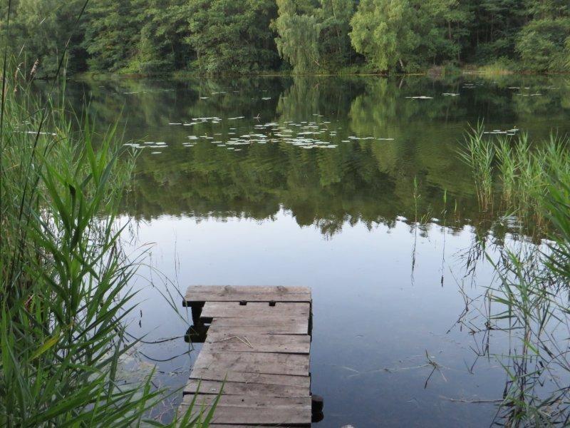 See, Steg, Schilf, Wald, grün, Wasserspiegelung, Seenplatte