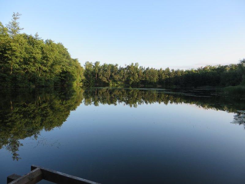 See, spiegelglatt, ruhig, Wald, Frühaufstehertour, Brühler Seenplatte