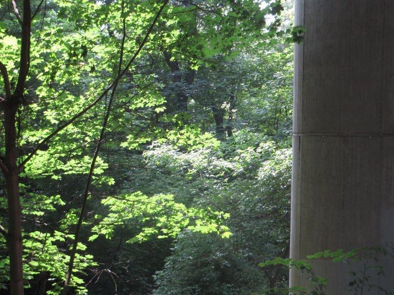 Baum, Wald, Rheinburgenweg: Beton im Wald am Rand des Rheinburgenwegs