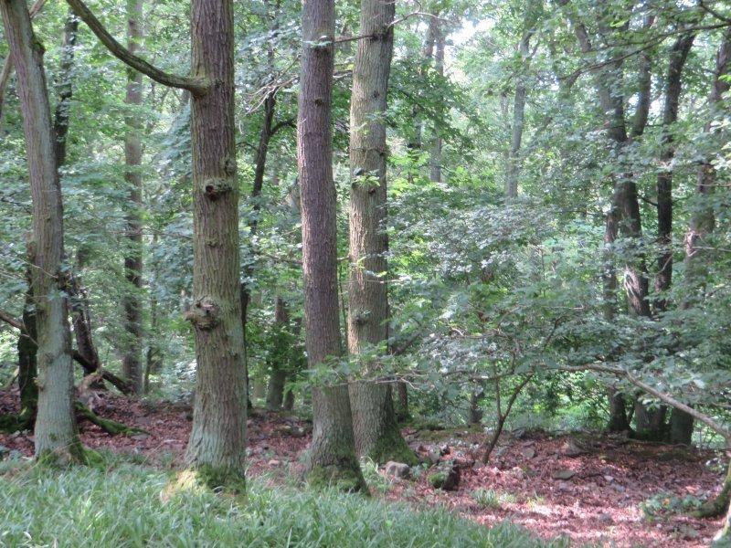 Wald, Grün, Pfad, Schatten: Wald, Wald, Wald. Fast der ganze restliche Weg führt durch schattigen Wald