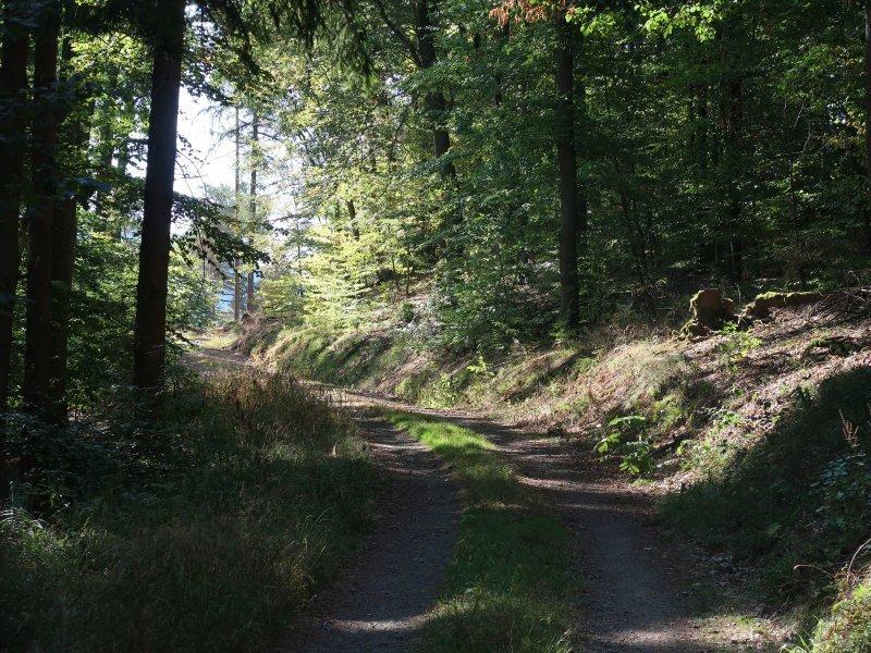 Waldweg im Ahrtal, Nadelwald wirft Schatten