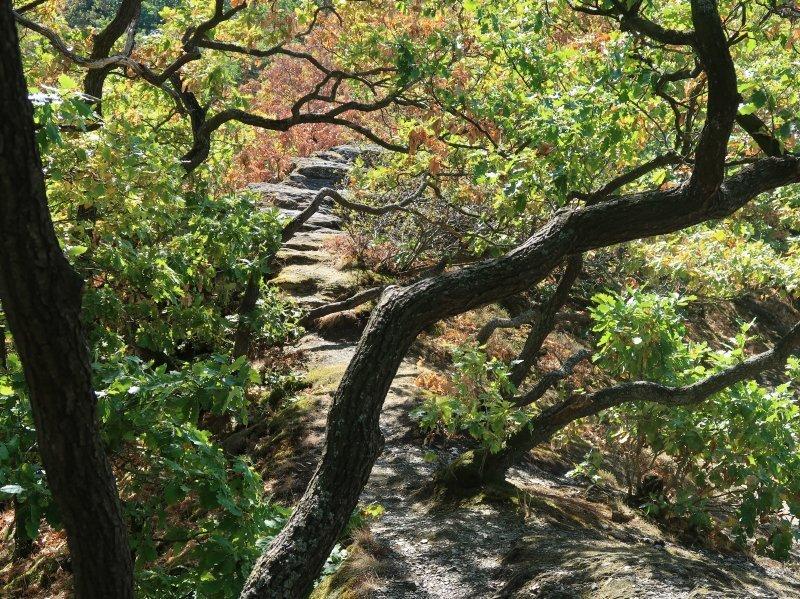 Die Hügel des Ahrtals bilden einen reizvollen Gegensatz zum Grün der Wingerte