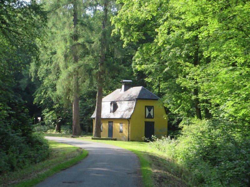 Wald, Bäume, Haus, Häuschen, grün, gelb