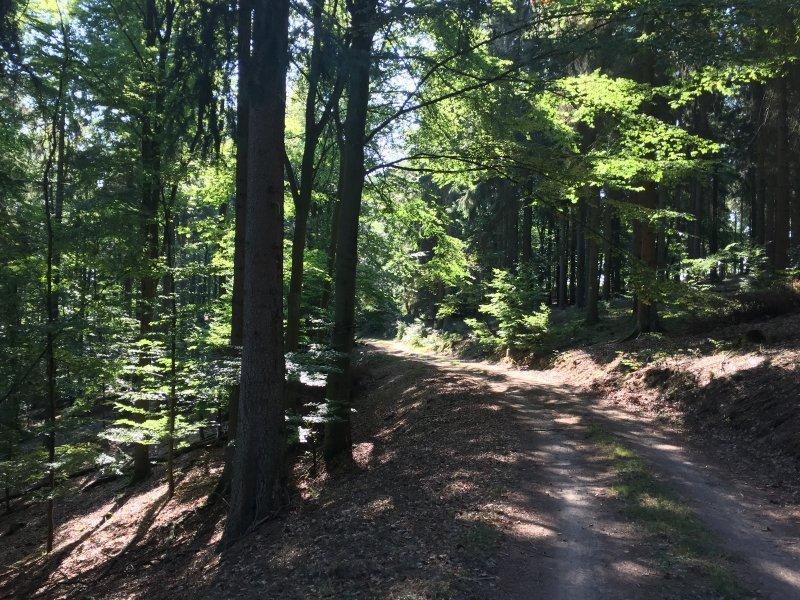 Immer noch ein breiter weg im Wald: der Karl-Kaufmann-Weg.