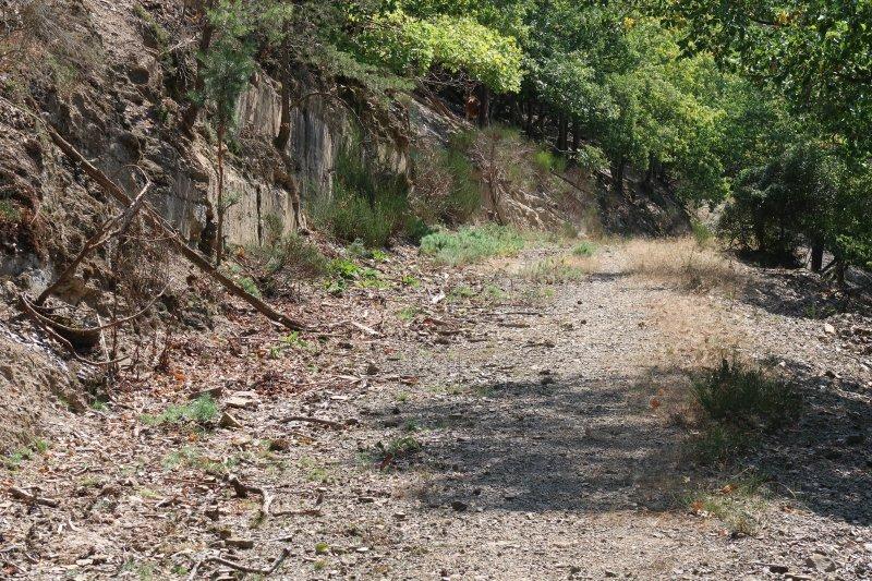 trockener Weg im Sonnenschein, vor einer Minute stob hier eine Schar von jungen Hirschkühen quer über den Weg