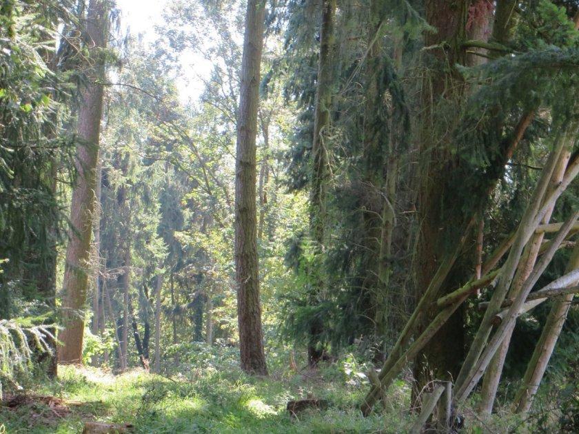 Ein letzter Blick nach links, Abschied von den hohen Bäumen, dann geht es hinaus ins Feld.