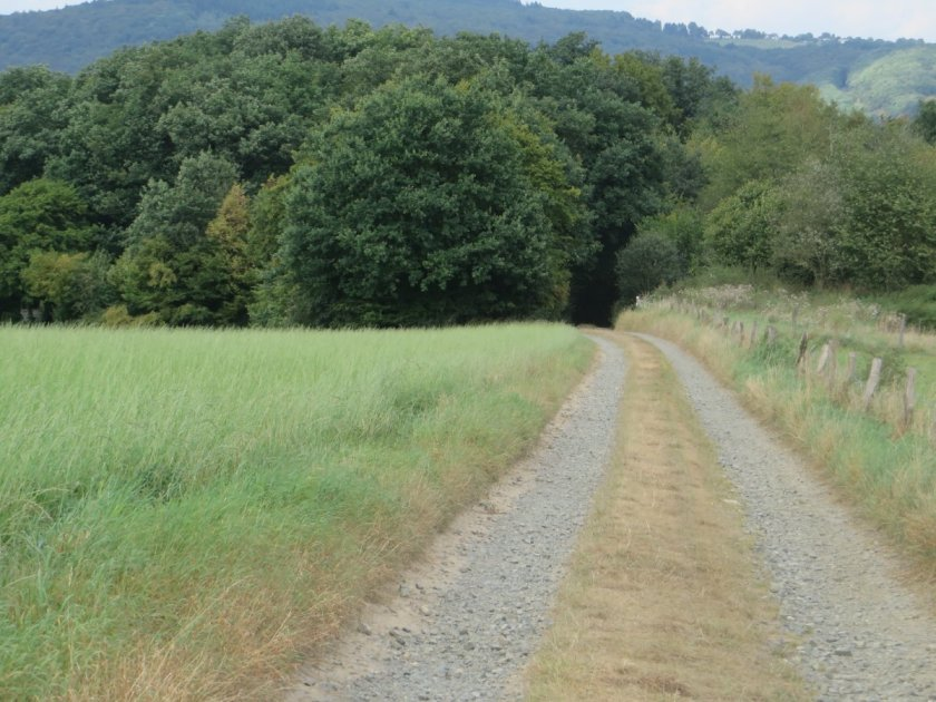 Ein Stück des Weges läuft zwischen Weiden auf den Waldrand zu.